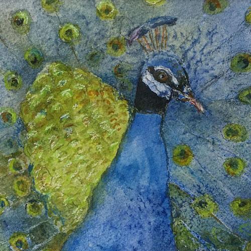 Peacock - Brenda Lawson